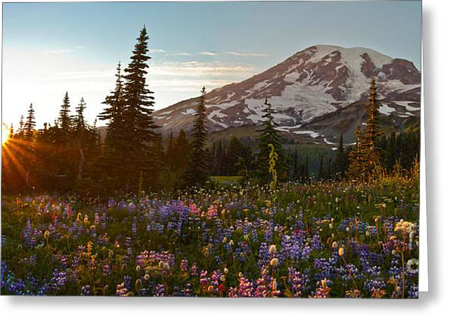 Golden Meadows Of Wildflowers Greeting Card by Mike Reid