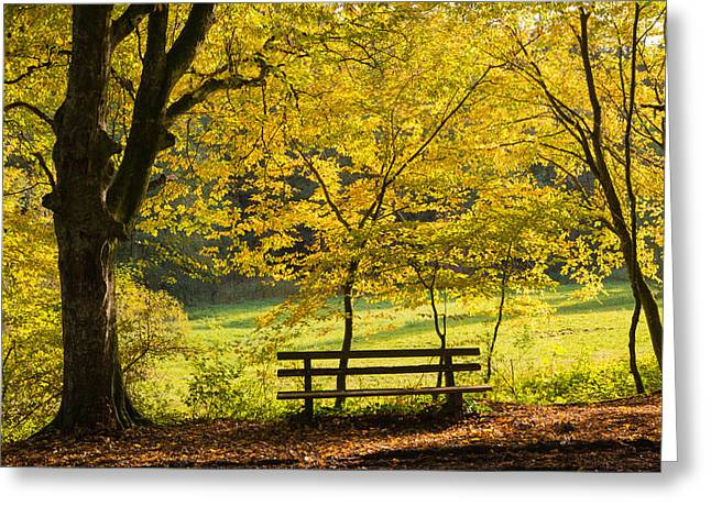 Deutschland Greeting Cards - Golden October - bench and yellow trees in fall Greeting Card by Matthias Hauser