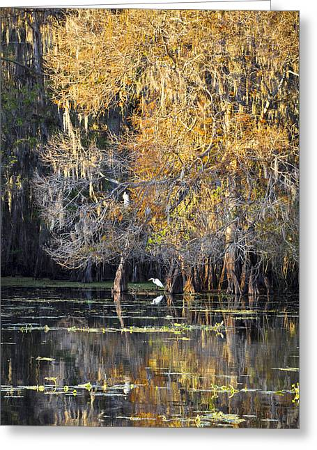 Living Life Photography Greeting Cards - Golden On The River Greeting Card by Carolyn Marshall