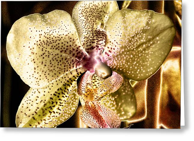 Golden Orchid Greeting Card by Barbara Middleton