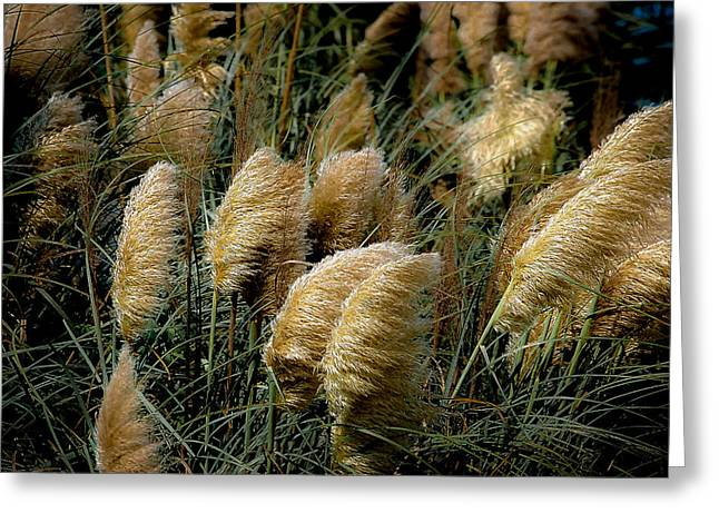Vicky Browning Greeting Cards - Golden Pampas in the Wind Greeting Card by DigiArt Diaries by Vicky B Fuller