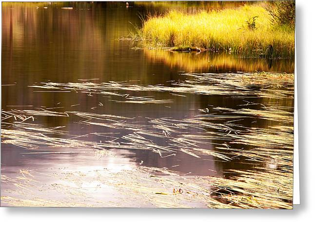 Golden Pond Greeting Cards - Golden Pond Greeting Card by The Forests Edge Photography - Diane Sandoval
