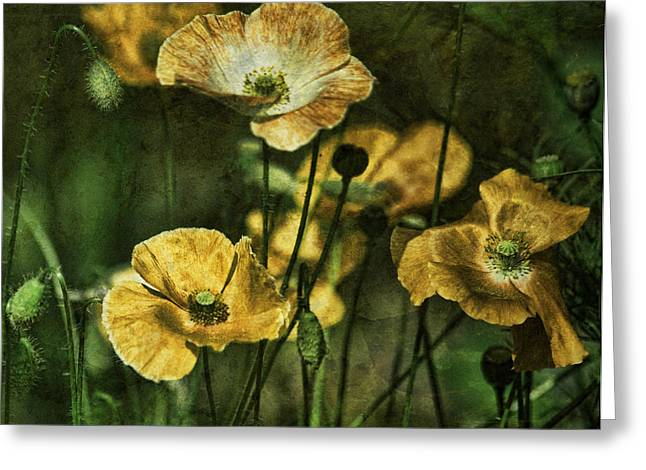 Olive Green Greeting Cards - Golden Poppies Greeting Card by Bonnie Bruno