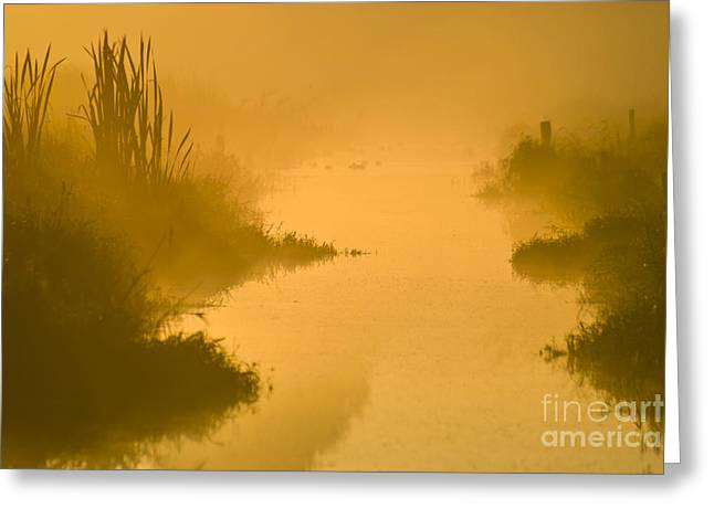 Bulrushes Greeting Cards - Golden Riverside Greeting Card by Heiko Koehrer-Wagner