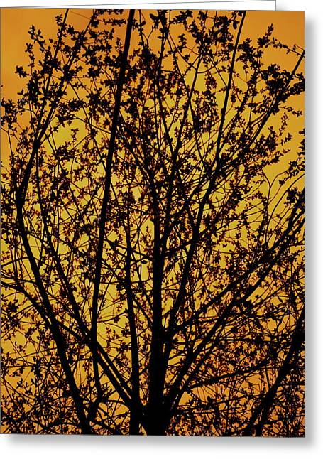 Edmonton Photographer Greeting Cards - Golden Roots Greeting Card by Jerry Cordeiro