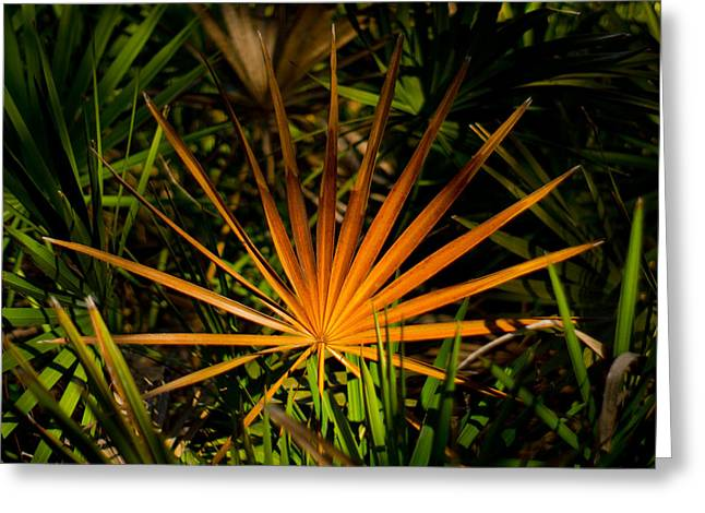 Golden Saw Palmetto Greeting Card by John Myers