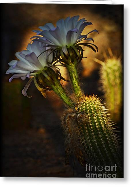 Torch Cactus Greeting Cards - Golden Torch Cactus  Greeting Card by Saija  Lehtonen