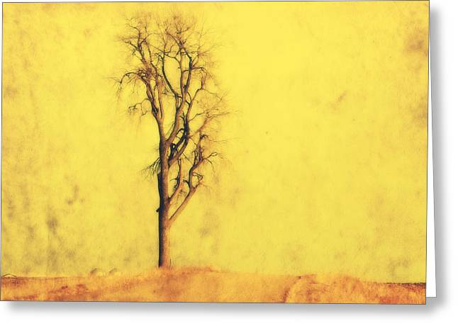 Country Chic Greeting Cards - Golden Tree Greeting Card by Julie Hamilton