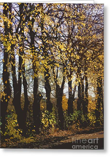 Autumn Photos Greeting Cards - Golden trees 1 Greeting Card by Carol Lynch
