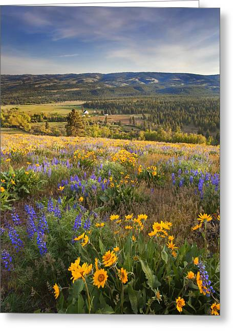 Foothill Greeting Cards - Golden Valley Greeting Card by Mike  Dawson
