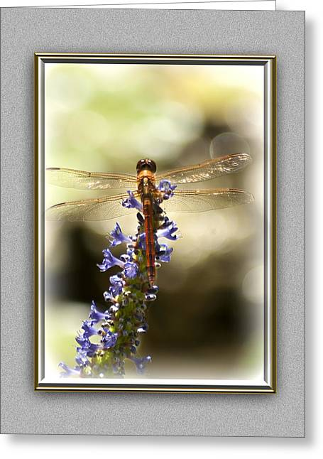 Dragon Fly Photo Greeting Cards - Golden Wings Greeting Card by Carolyn Marshall