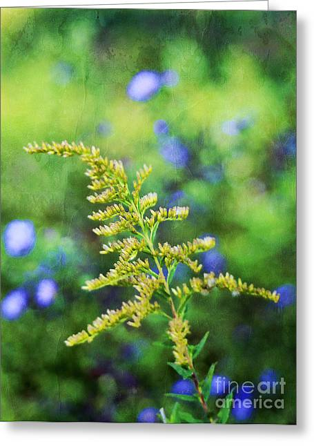 Golden Summer Grass Greeting Cards - Goldenrod Greeting Card by Darren Fisher