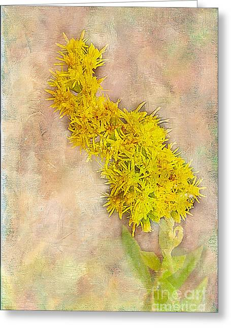 Goldenrod Greeting Card by Judi Bagwell