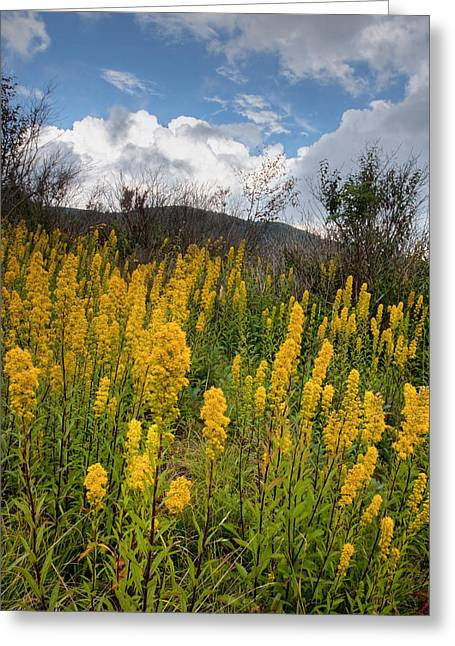 Wildflower Photograph Greeting Cards - Goldenrod on the Parkway Greeting Card by Rob Travis