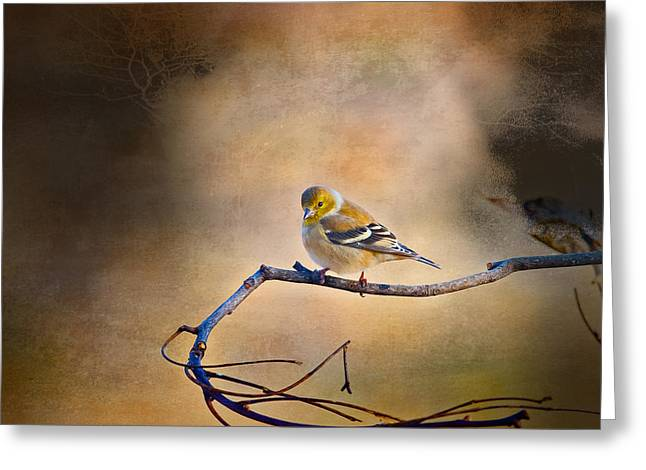 Goldfinch In Deep Thought Greeting Card by J Larry Walker