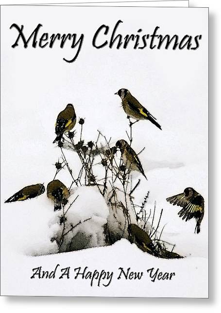 Goldfinches At Christmas  Greeting Card by Cliff Norton
