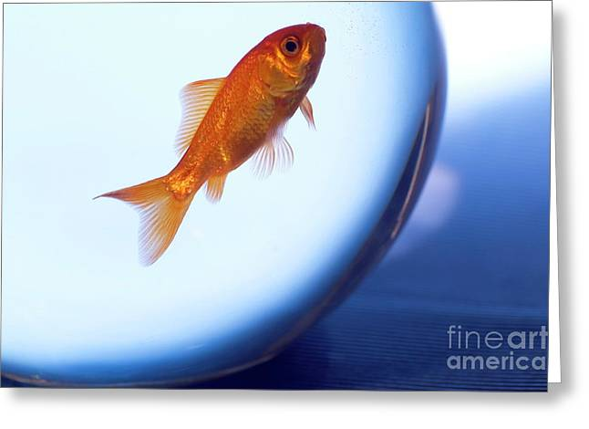 Confined Greeting Cards - Goldfish swimming in a small fishbowl Greeting Card by Sami Sarkis