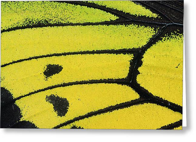 Animals And Insects Greeting Cards - Goliath Birdwing Butterfly Wing Greeting Card by Konrad Wothe