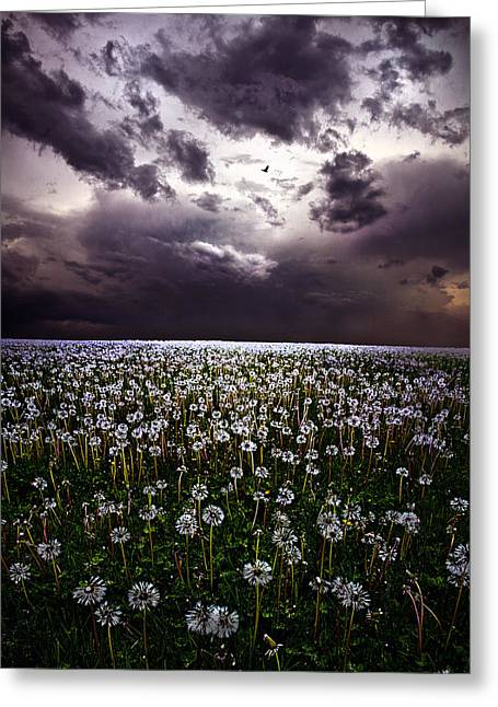 Geographic Greeting Cards - Gone to Seed Greeting Card by Phil Koch