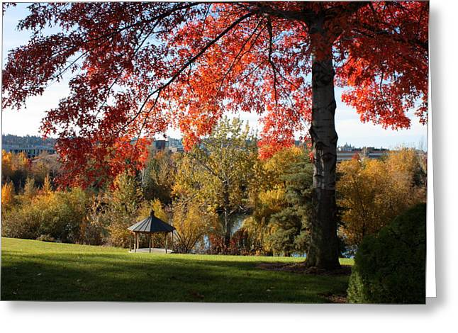 Spokane Greeting Cards - Gonzaga with Autumn Tree Canopy Greeting Card by Carol Groenen