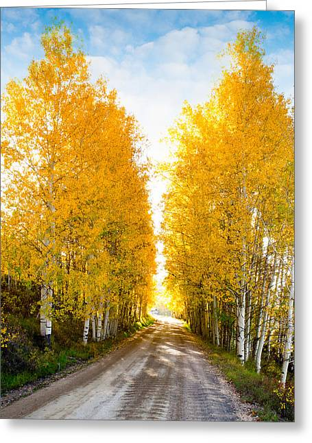 Fall Colors Greeting Cards - Good Day Sunshine Greeting Card by Tim Reaves