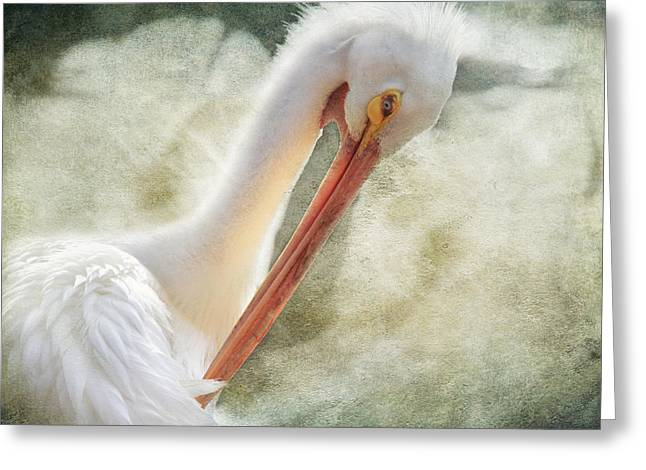 Orange Beak Greeting Cards - Good Grooming Greeting Card by Laurie Search