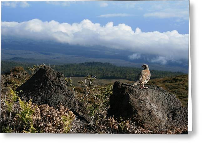 Inspirational Wildlife Prints Greeting Cards - Good Morning Maui Greeting Card by Sharon Mau