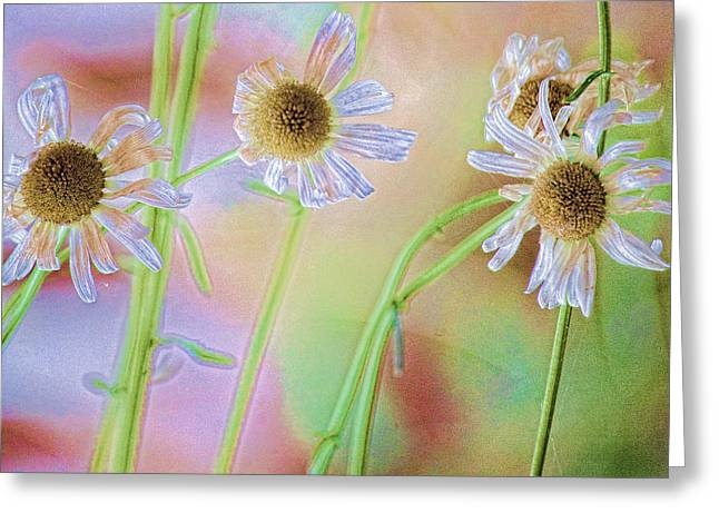 Spiderwebs Greeting Cards - Good News Greeting Card by Bonnie Bruno