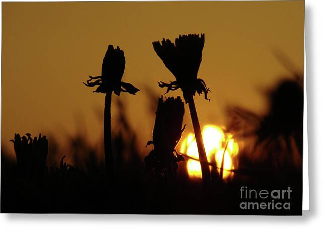 Sunset Greeting Cards Greeting Cards - Good Night Greeting Card by Bruno Santoro