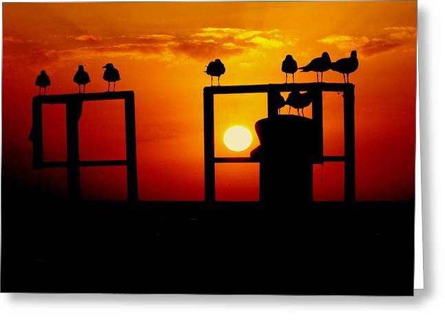 GOODNIGHT GULLS Greeting Card by KAREN WILES