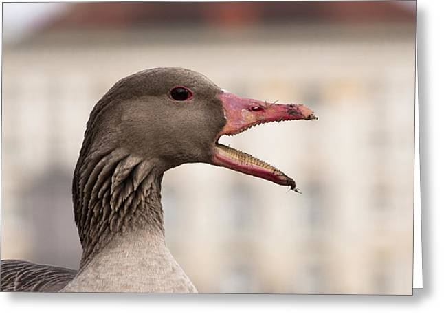 Goose at Nymphenburg palace Greeting Card by Andrew  Michael