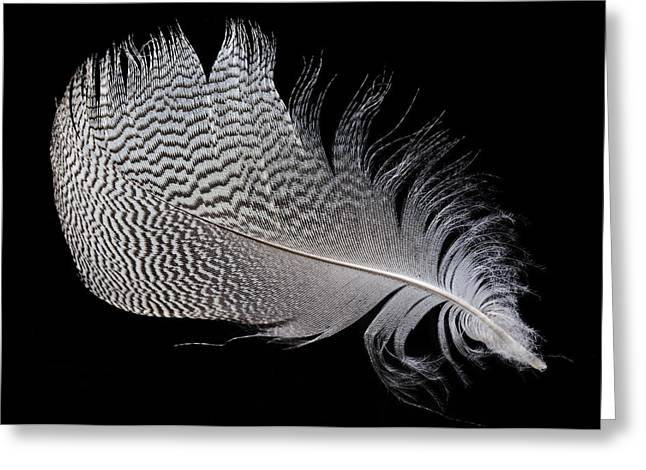 Greylag Greeting Cards - Goose Feather Greeting Card by Dirk Wiersma
