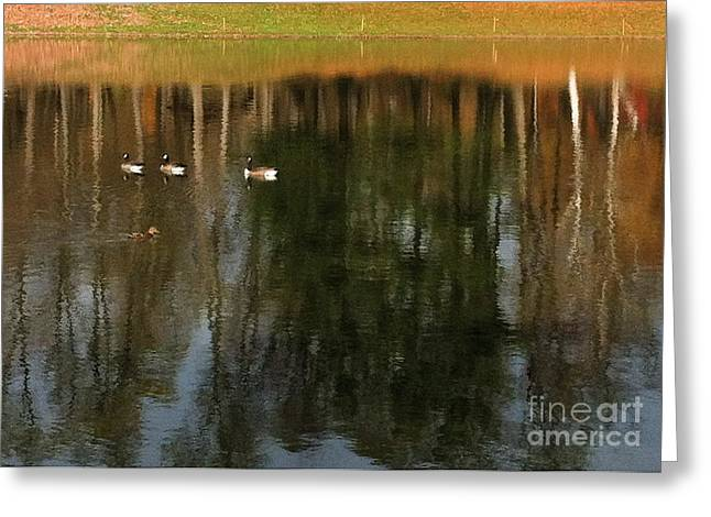 Foliage Photographs Greeting Cards - Goose Goose Duck Goose Greeting Card by Trish Hale