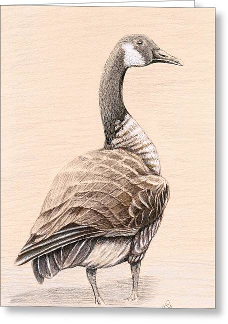 Water Fowl Mixed Media Greeting Cards - Goose Greeting Card by H C Denney