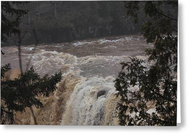 Rapids Reliefs Greeting Cards - Gooseberry Greeting Card by Ann Caduff