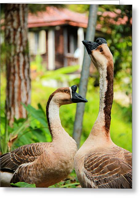 Couple Pyrography Greeting Cards - Gooses Greeting Card by Chee Ben Kit
