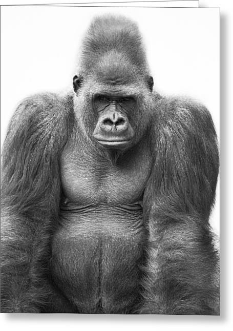 Thought Wild Greeting Cards - Gorilla Greeting Card by Darren Greenwood