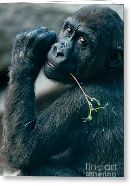Portrait With Mountain Greeting Cards - Gorilla has a snack Greeting Card by Andrew  Michael