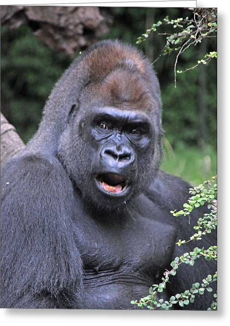Gorilla Greeting Card by Mike Martin