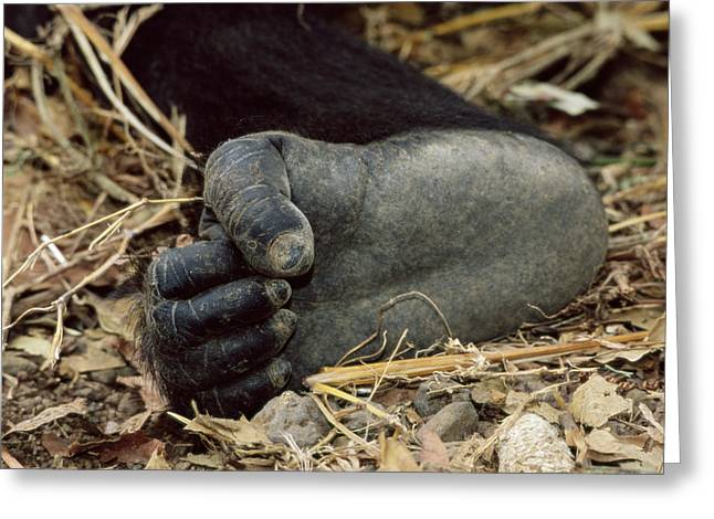 Cross River Greeting Cards - Gorillas Foot Greeting Card by Tony Camacho