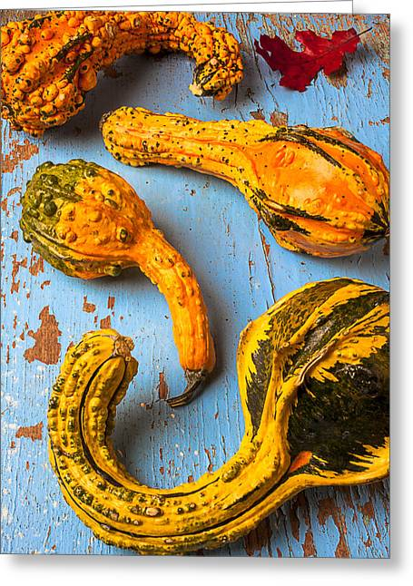 Gourd Greeting Cards - Gourds on wooden blue board Greeting Card by Garry Gay
