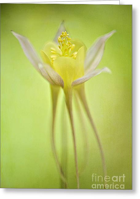 Close Focus Floral Greeting Cards - Graceful Greeting Card by Jacky Parker