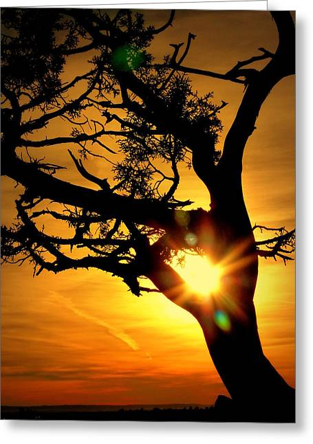 Gnarly Greeting Cards - Grand Canyon Sunset Greeting Card by Cindy Wright