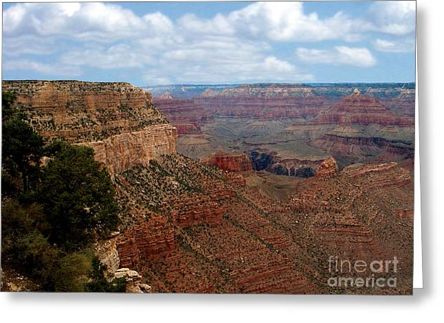 Elk Greeting Cards - Grand Canyon Greeting Card by The Kepharts