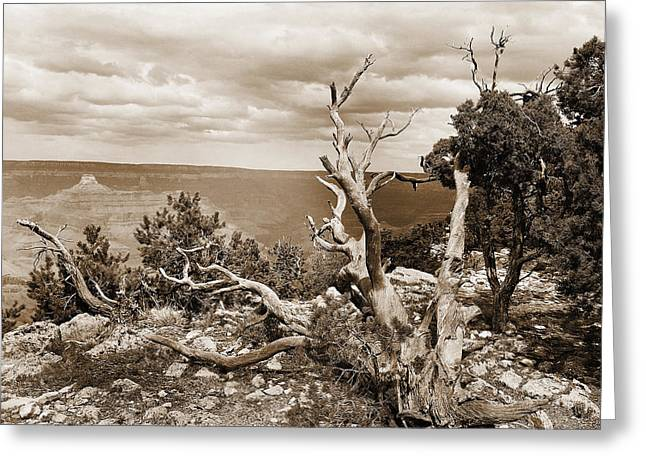 Arizona Framed Prints Greeting Cards - Grand Canyon through Old Trees Greeting Card by M K  Miller