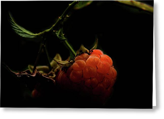Grandmas Berries Greeting Card by JC Photography and Art
