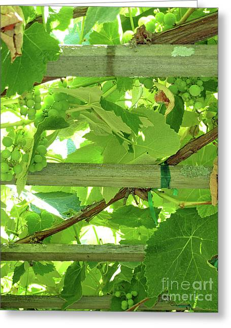 Fruit On The Vine Greeting Cards - Grape Arbor Greeting Card by Methune Hively