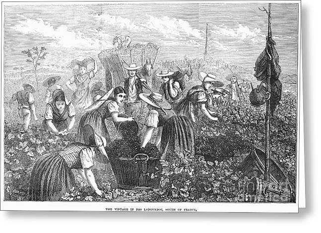 1874 Greeting Cards - Grape Harvest, 1874 Greeting Card by Granger