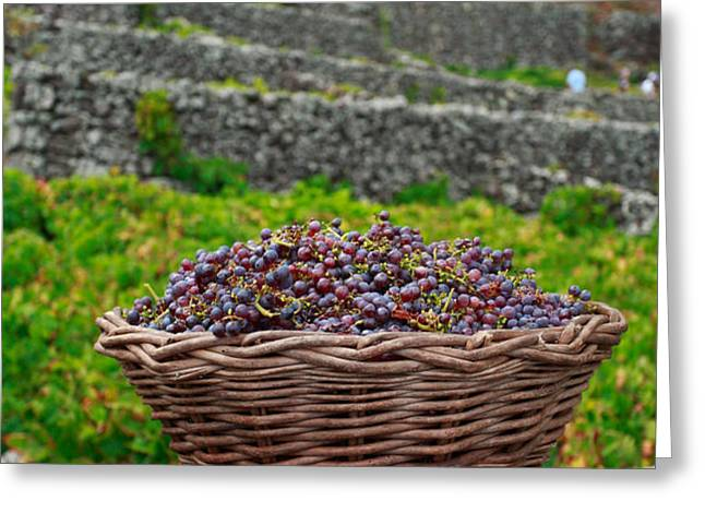 Grape harvest Greeting Card by Gaspar Avila