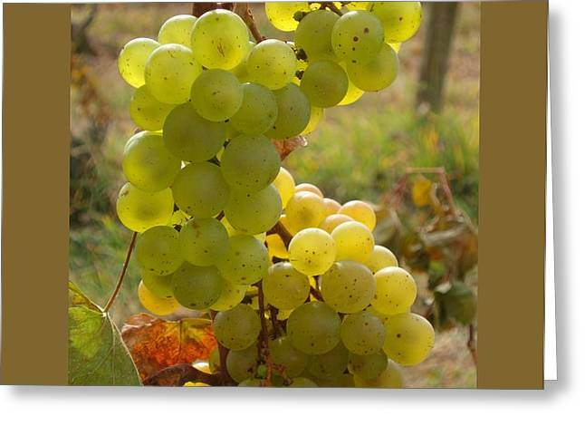 Grape Spiral Greeting Card by Patricia Overmoyer